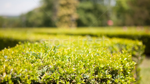 Díszítő kert díszlet zárt kilátás virág Stock fotó © hraska