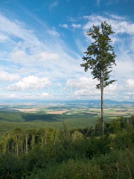 Magányos fa erdő jelenet vidéki vidék Stock fotó © hraska