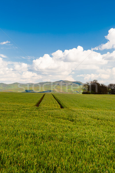 Stock photo: Track of tractor on the green corn field