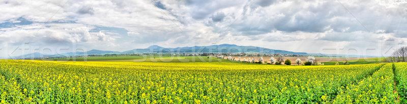 Spring Farmland Stock photo © hraska