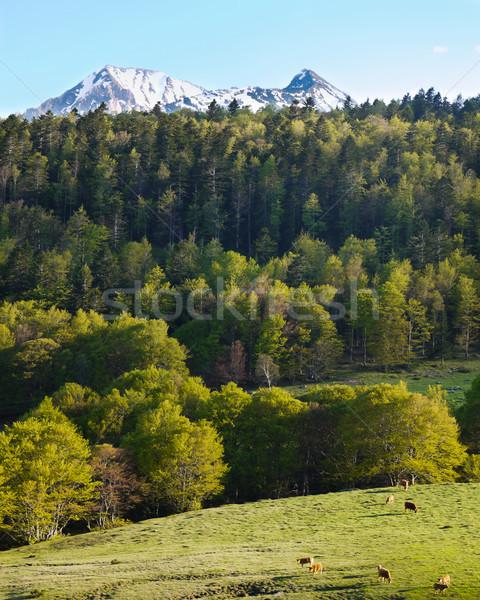 Landschap landschap weide koeien berg Stockfoto © hraska