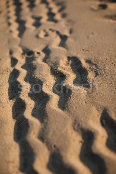 Wheel tracks on the sand Stock photo © hraska