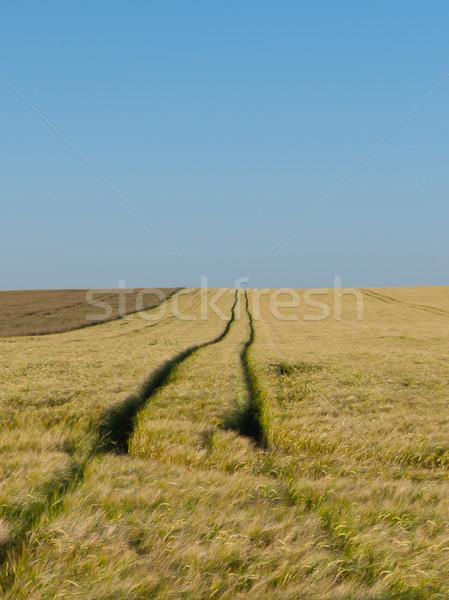 Drogowego jęczmień złota dziedzinie Błękitne niebo żywności Zdjęcia stock © hraska
