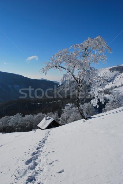 Trail in the snow Stock photo © hraska