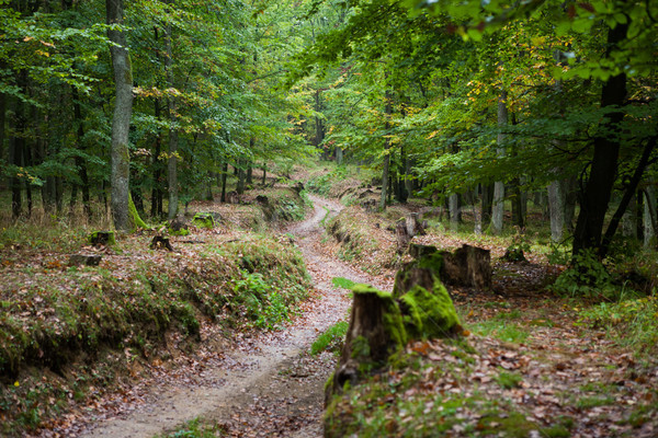 Peaceful path in the autumn forest Stock photo © hraska