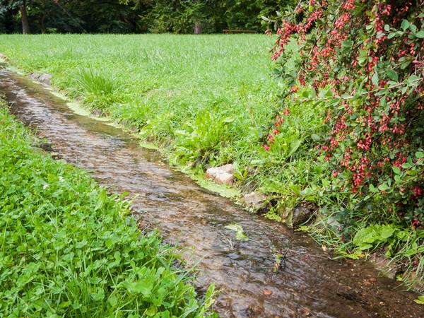 Corriente parque verde herboso pradera pequeño Foto stock © hraska