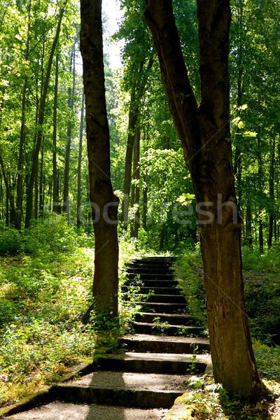 Klatka schodowa drzew wcześnie rano światło słoneczne drzewo wiosną Zdjęcia stock © hraska