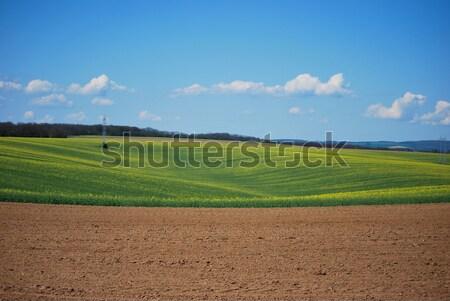 Oil-seed field in spring Stock photo © hraska