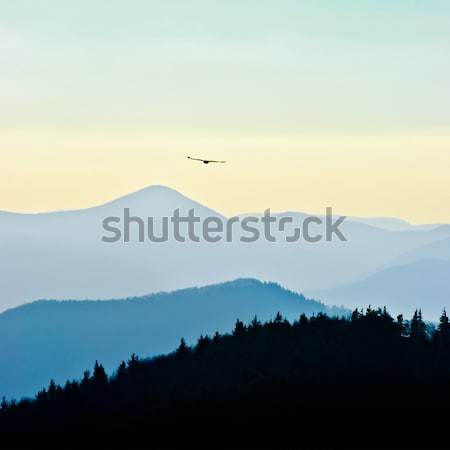 Swift eagle Stock photo © hraska