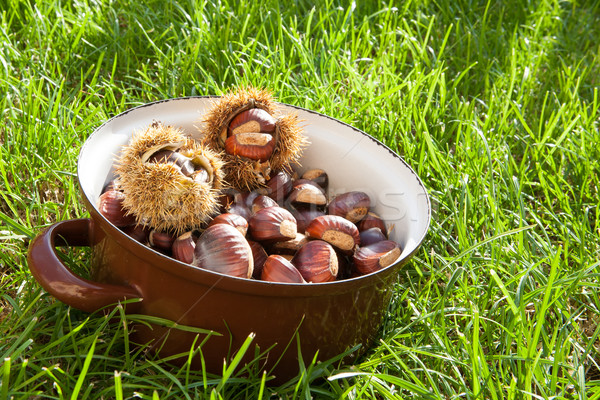 Fresh chestnuts in a pot Stock photo © hraska