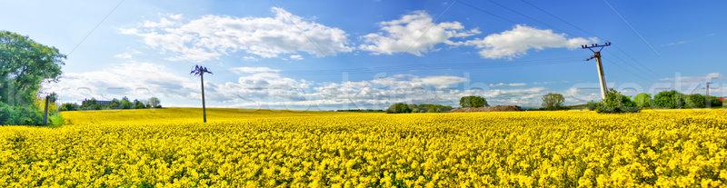 Panorámica vista violación campo cielo árbol Foto stock © hraska
