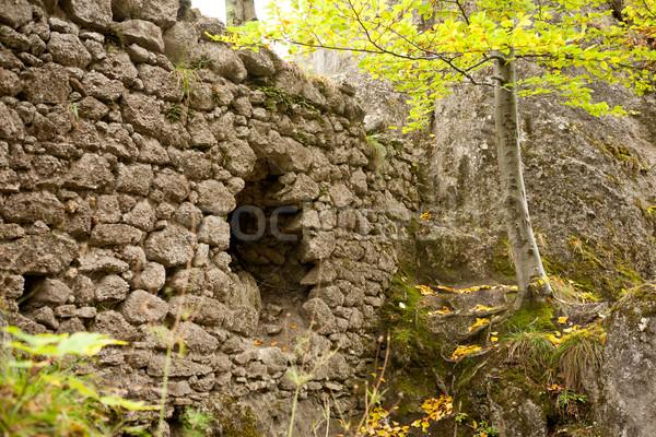 Ruins overgrown by forest Stock photo © hraska