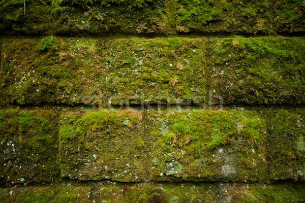 Moss on stone blocks wall Stock photo © hraska
