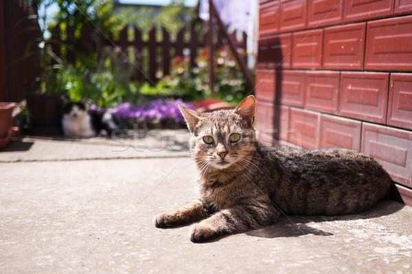 Cat lying on ground Stock photo © hraska