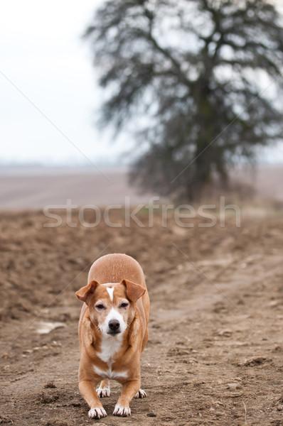 Divertente cane Crazy bene tempo Foto d'archivio © hraska