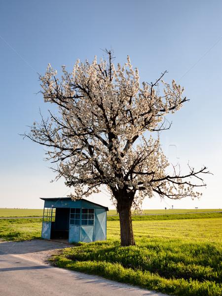 Desolate bus stop Stock photo © hraska