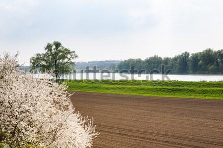 Verimli arazi göl alan güneşli bahar Stok fotoğraf © hraska