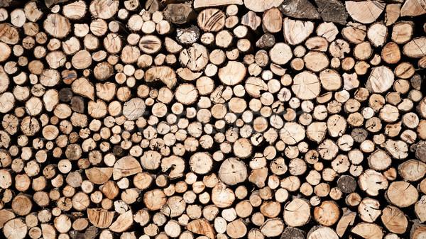 Tree stumps background Stock photo © hraska