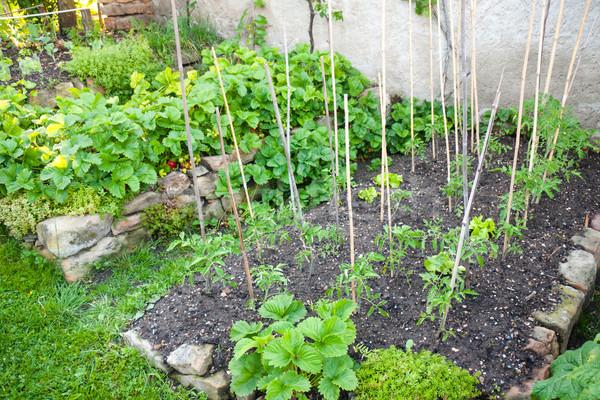 Közösség kertészkedés fiatal friss zöldségek zöldségek eprek Stock fotó © hraska