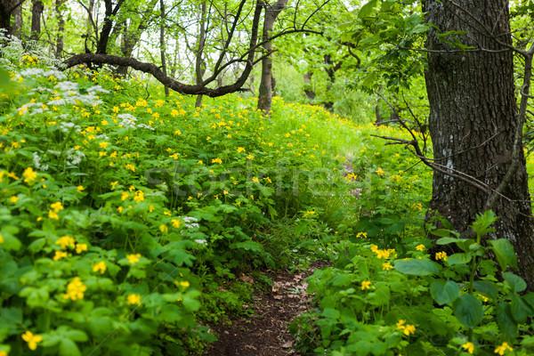 Fleur randonnée sentier forêt printemps bois Photo stock © hraska