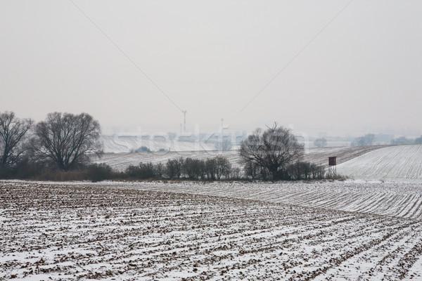 первый снега кукурузы области покрытый рано Сток-фото © hraska