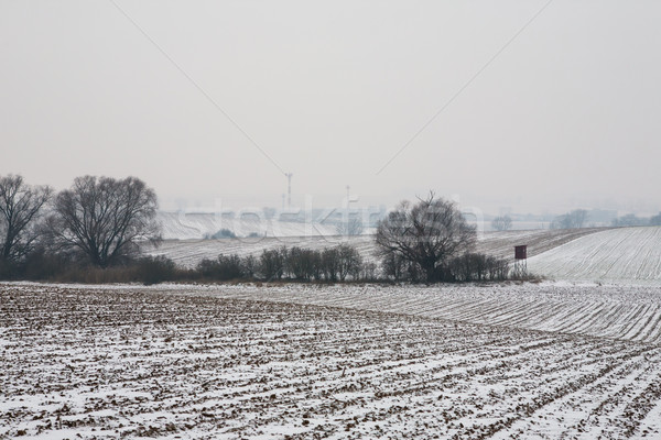 First snow on the corn field Stock photo © hraska
