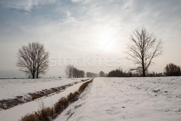 Winter landschap bomen rivier zonsopgang bank Stockfoto © hraska