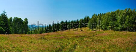 Stitched Panorama of mountains meadow Stock photo © hraska
