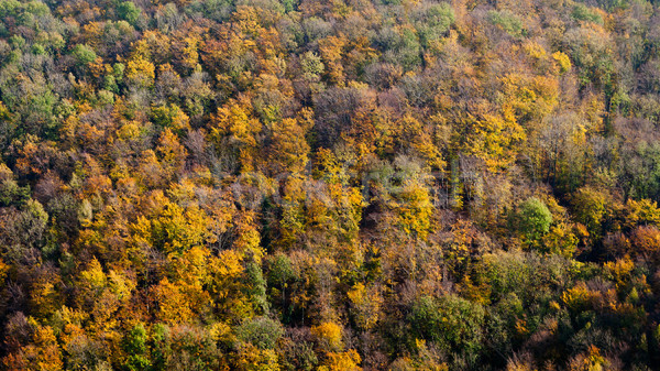 Mountain autumn landscape with colorful deciduous forest Stock photo © hraska