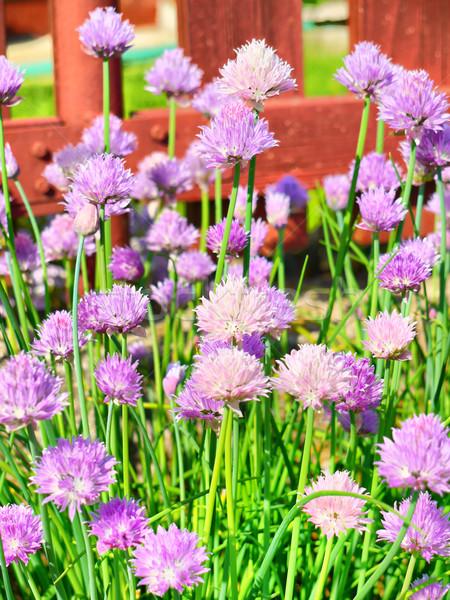 цветения мнение многие весны Сток-фото © hraska