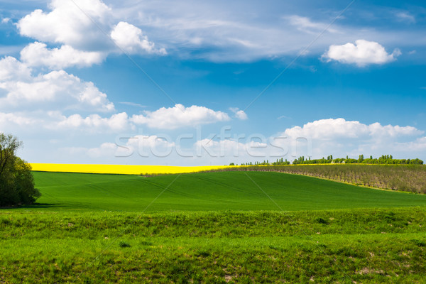 Heldere zonnige voorjaar dag tijd blauwe hemel Stockfoto © hraska