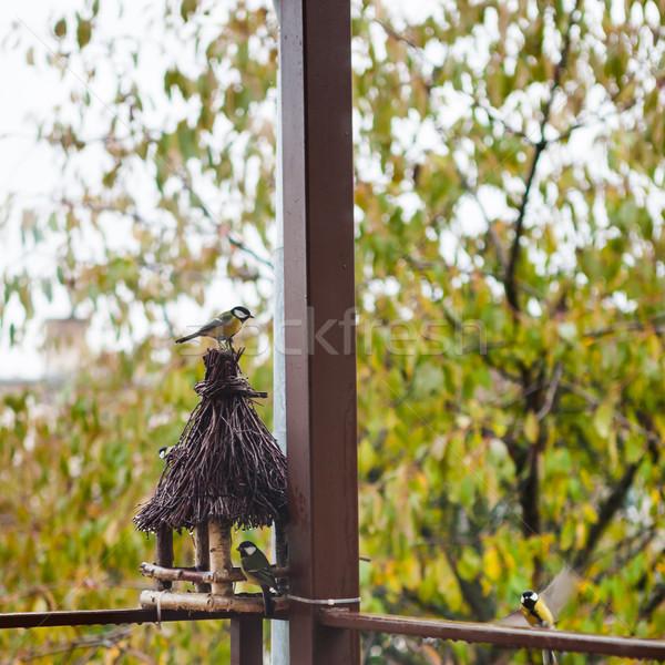 Stock photo: Flock of Great tit birds sitting near wooden feeder