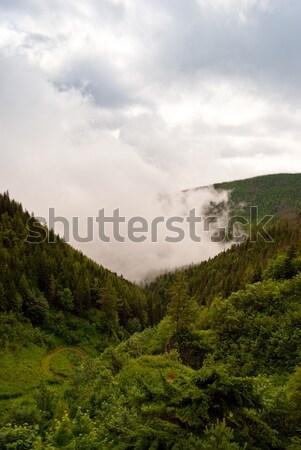Vihar hegyek lucfenyő erdő sötét felhők Stock fotó © hraska