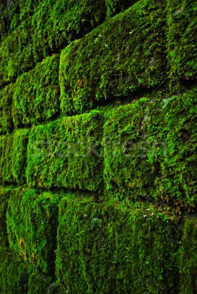 Yosun duvar tuğla duvar güzel yeşil Bina Stok fotoğraf © hraska