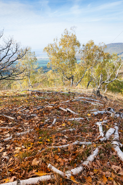 Najaar berk bos mooie boom hemel Stockfoto © hraska