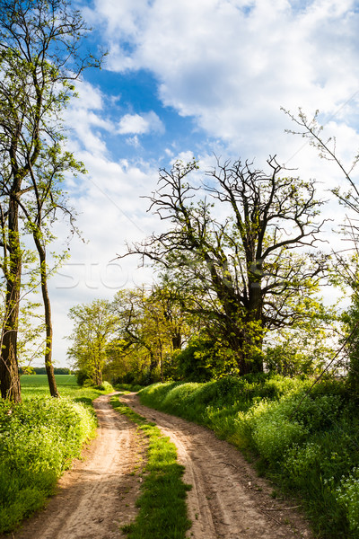 Rural road lined by trees Stock photo © hraska