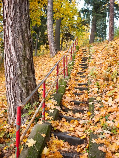 Escaliers décoré laisse pierre couvert coloré Photo stock © hraska