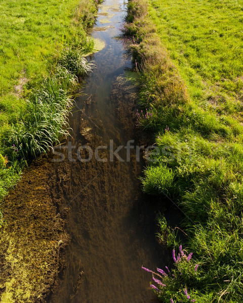 Summer on the lowland river bed landscape Stock photo © hraska