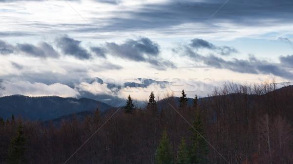 Morning in the Carpathian forest Stock photo © hraska