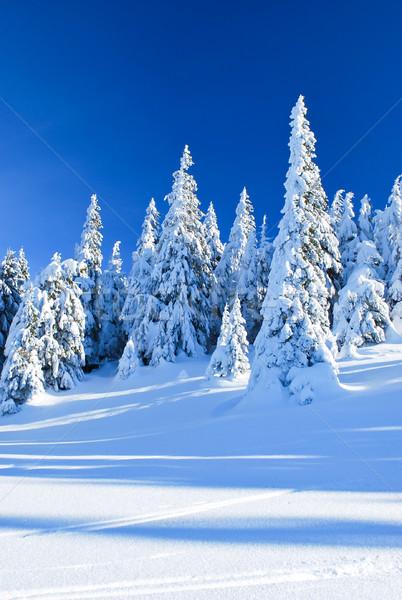 Tűlevelű fák tél tájkép kék ég fa Stock fotó © hraska
