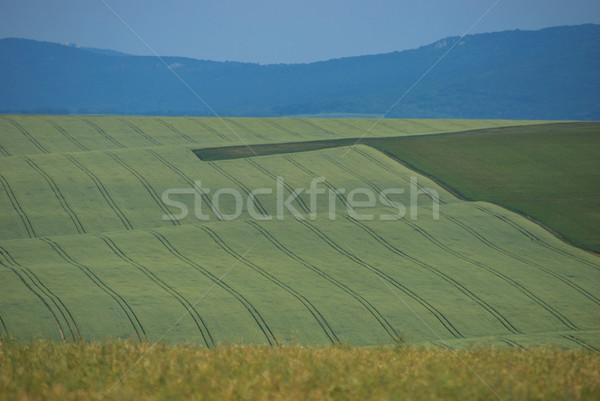 tractor roads Stock photo © hraska