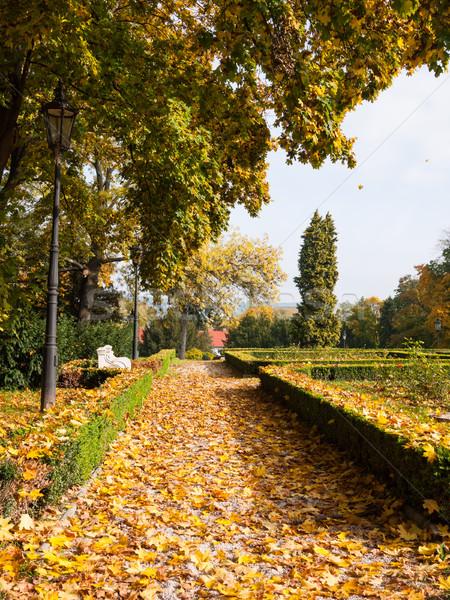 Autumn leaves in a park Stock photo © hraska