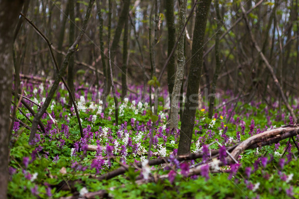 Heldere bloemen bos vloer mooie voorjaar Stockfoto © hraska