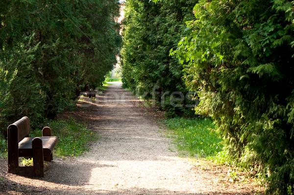 park avenue with bench  Stock photo © hraska