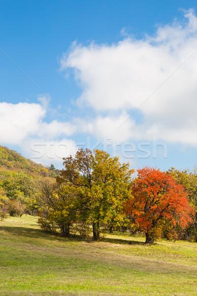 Színes ősz fák élénk piros citromsárga Stock fotó © hraska