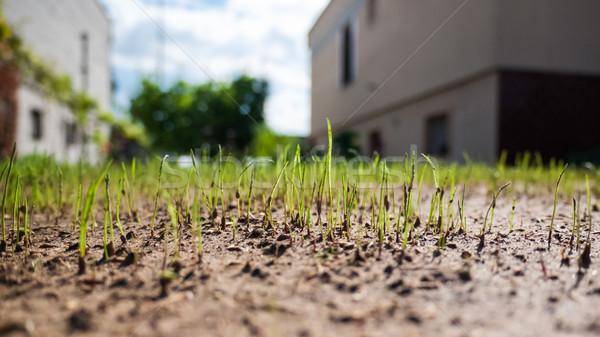 Groeiend omhoog gras groen gras Stockfoto © hraska
