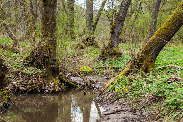 Close-up of a small forest brook Stock photo © hraska