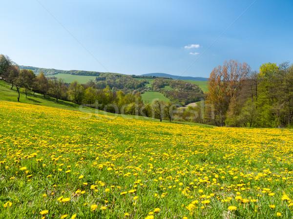 Meadow of spring flowers Stock photo © hraska
