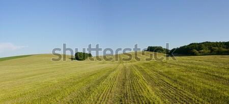 Clean trifoglio campo estate giorno cielo Foto d'archivio © hraska