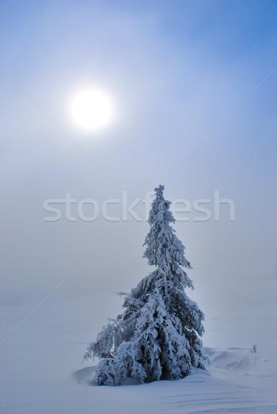 Snowy spruce Stock photo © hraska